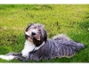 Aileen's Dog